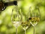 http://winespeaker.ru/img/news/vesennyaya_degustaciya_belih_vin.jpg?rand=607867042